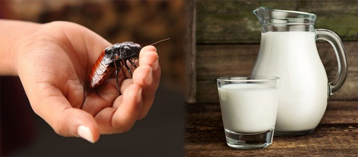 South African firm sells 'insect milk' as next superfood
