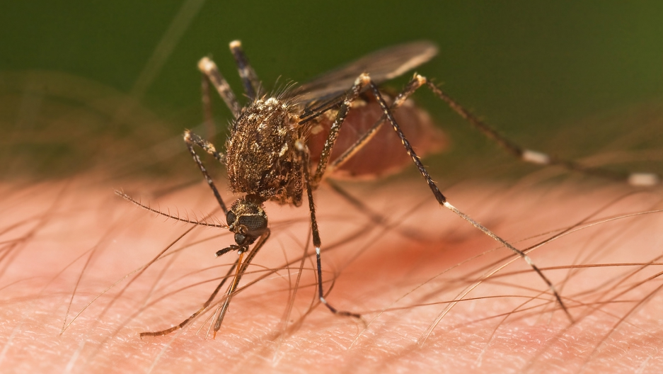 Bill Gates to finance eradication of malaria with mosquitoes that kill each other during sex