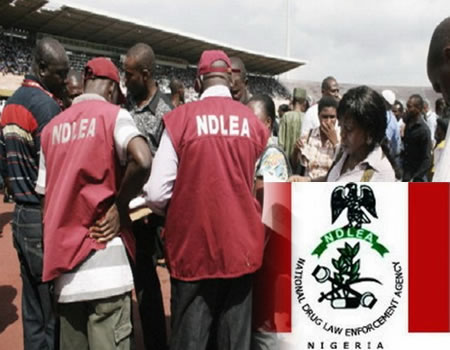 NDLEA vows to sustain fight against illicit drugs