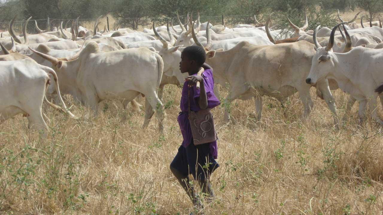 Suspected militias destroy farmlands in Plateau Community