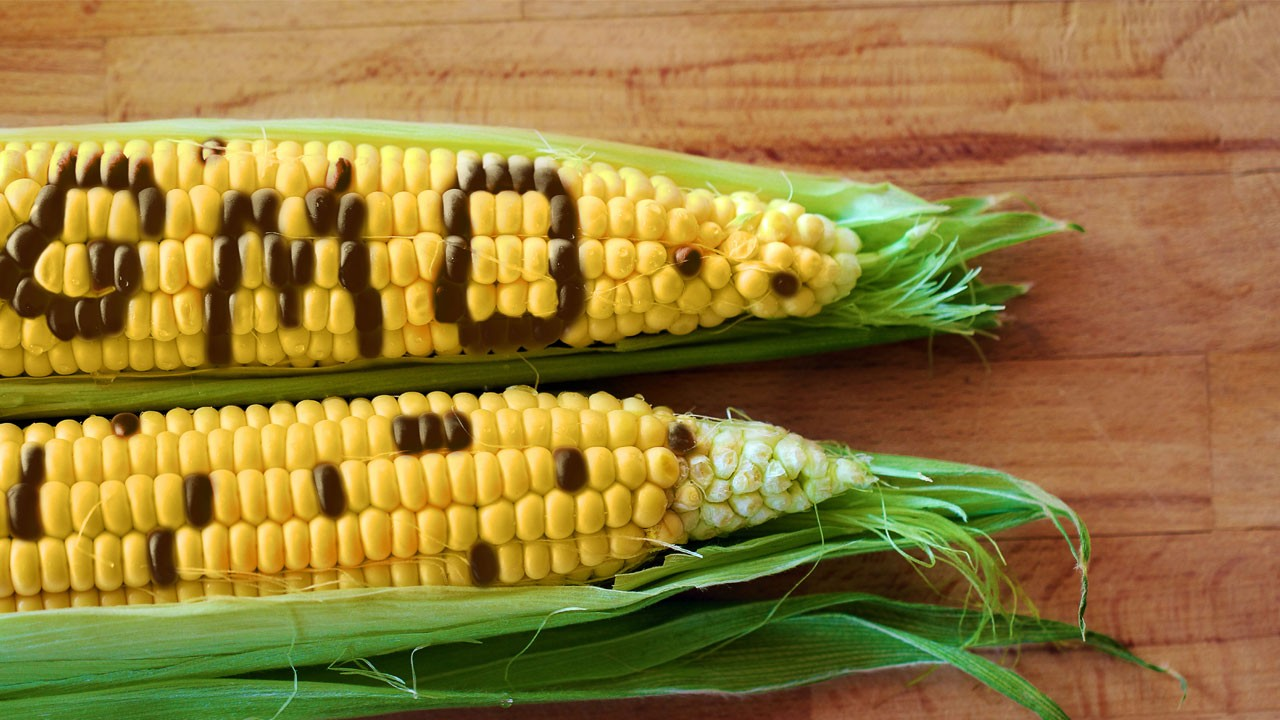 Experts endorse Genetic Modification for crops