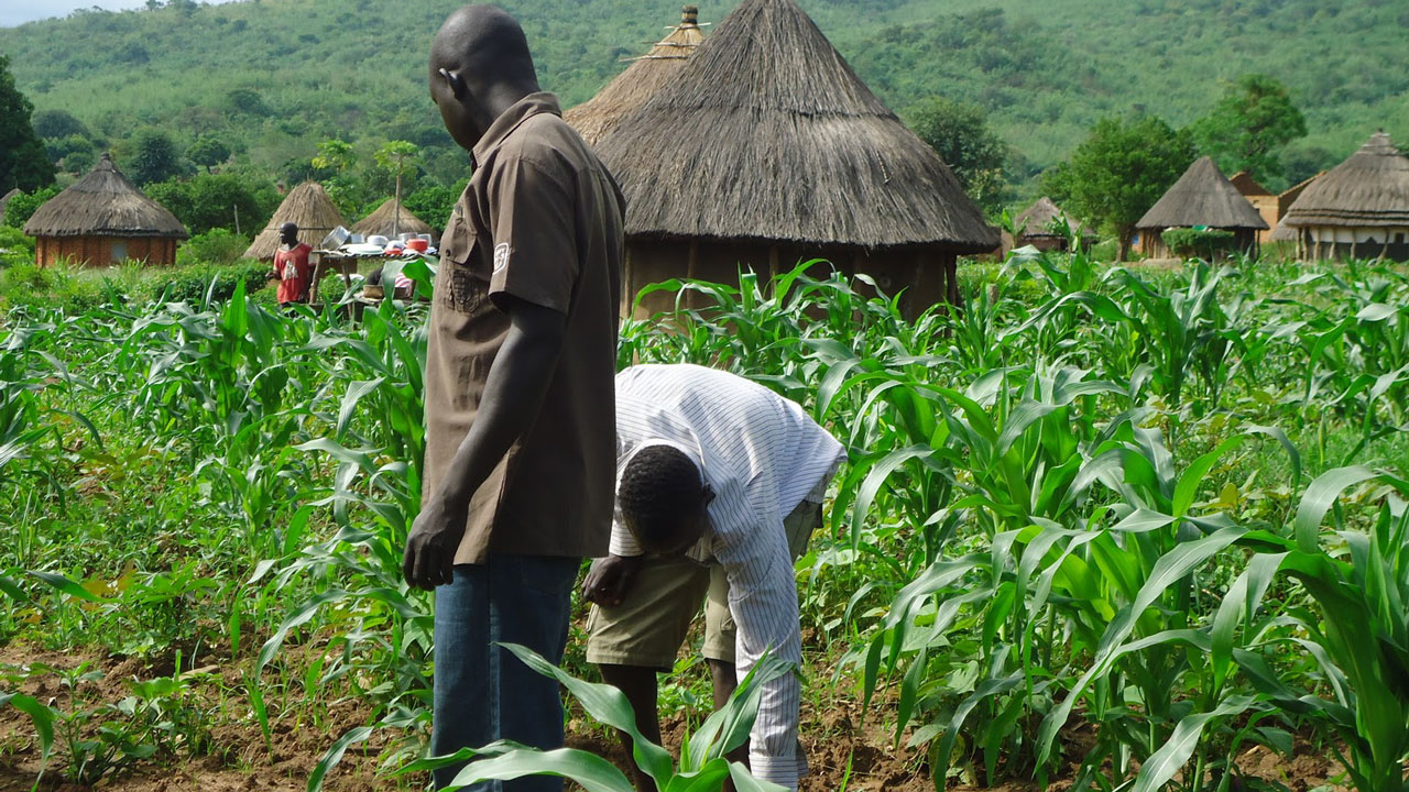 Kwara state farmers to benefit from 1 billion naira CBN agric loan