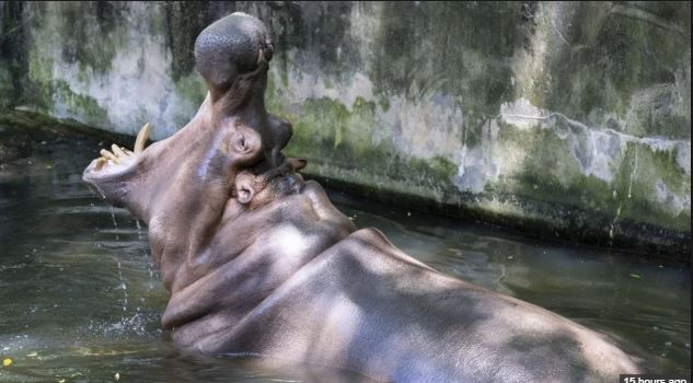 Hippo kills Taiwan tourist visiting Kenyan lake
