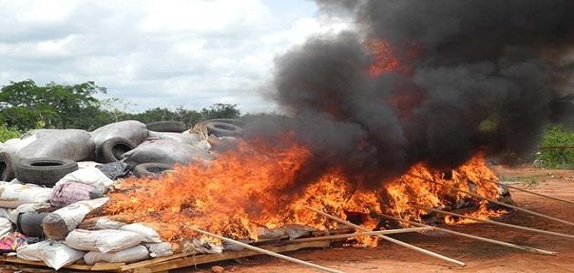 Ondo NDLEA burns 110,000 tonnes of cannabis