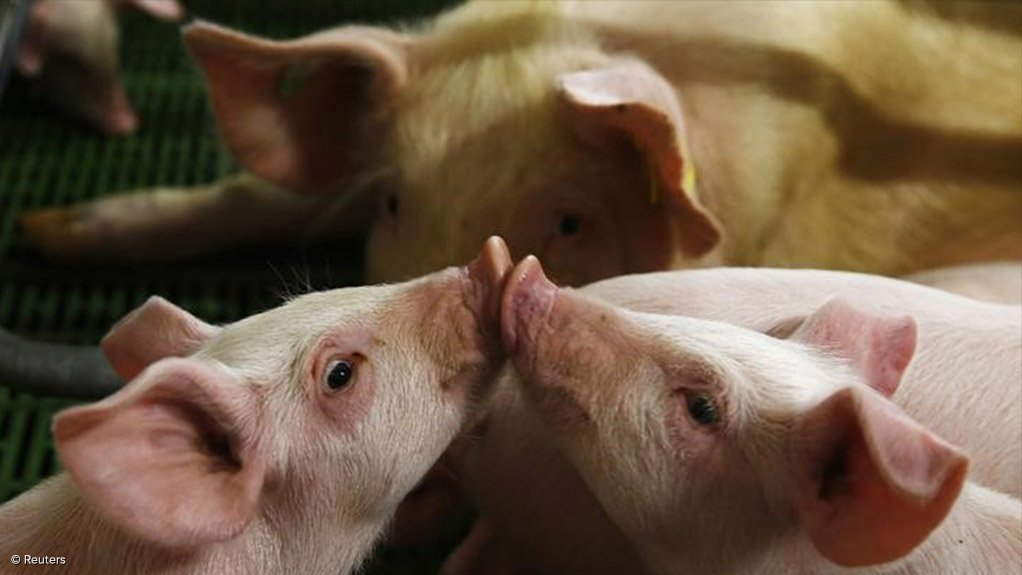 China northern region reports new African swine outbreak