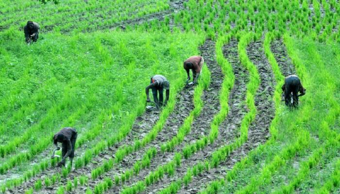 US injects $24m to boost agriculture sector