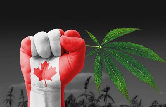 Canada runs out of marijuana supply two days after recreational use goes public