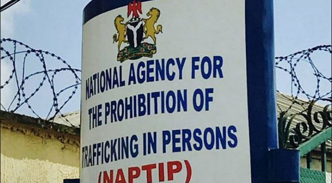 More than 217 human trafficking cases reported in Benue – NAPTIP