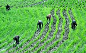 NASC to set up Biosafety law to protect property right of Nigeria's plant breeders