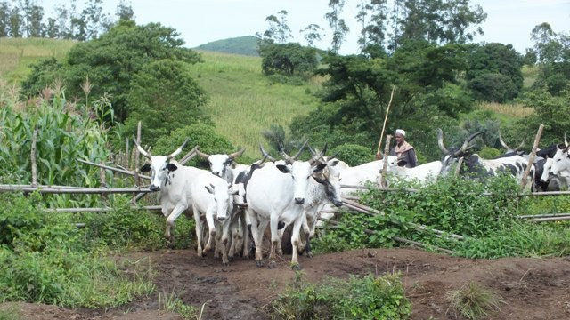Dry season: FG partners Nasarawa govt. to forestall herdsmen/farmers crises