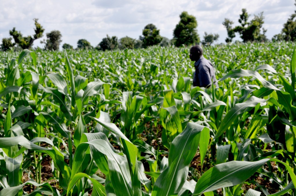 E.U. embarks on Agricultural intervention project in Taraba