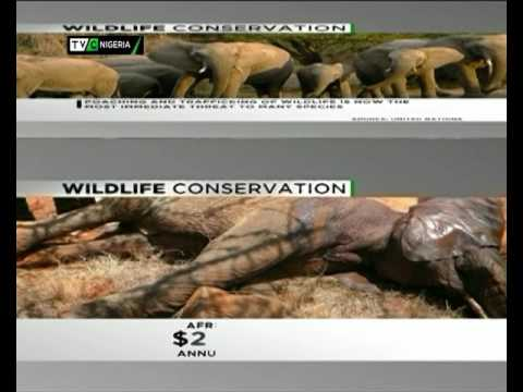 TVC Breakfast| World Wild Life day| March 3rd 2017
