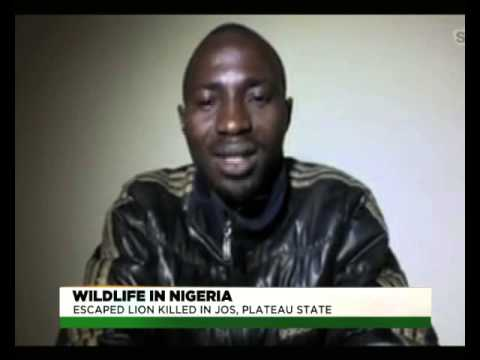 TVC BREAKFAST | WILDLIFE | THE KILLING OF A LION IN JOS, PLATEAU STATE